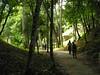 Birding along a path at Tikal (Photo by participant Max Rodel)