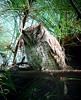 "Tropical Screech-Owl <div id=""caption_tourlink"" align=""right""> [photo © guide John Rowlett]</div>"