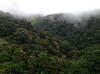 A view from the lodge at Mount Totumas out across the lovely cloud forest of the reserve (Photo by guide Jesse Fagan)