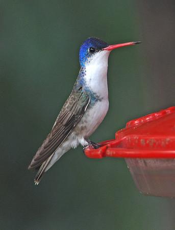 Arizona: Birding the Border