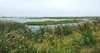 "Edwin B. Forsythe National Wildlife Refuge  <div id=""caption_tourlink"" align=""right"">[photo © participant Ellen Lowery]</div>"