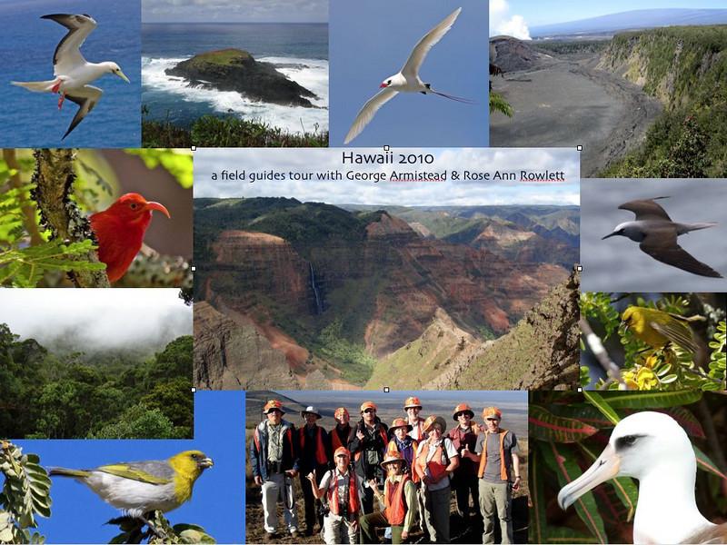 Our Hawaii 2010 group birded Oahu, Kauai, and the Big Island, March 21-31.