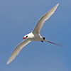 """The behavioral highlight of our birding on Oahu was watching Red-tailed Tropicbirds along the windy cliffs near the Halana Blowhole. <div id=""""caption_tourlink"""" align=""""right""""><br>[photo © George Armistead]</div>"""