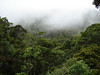 """The most intact forest left on Kauai, the Alakai Swamp State Wilderness is still home to native plants and is the last stronghold for Kauai's native land birds.  <div id=""""caption_tourlink"""" align=""""right""""><br>[photo © Rose Ann Rowlett]</div>"""
