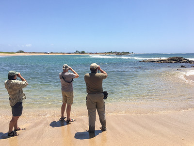 Guide Dan Lane and two of our 2017 participants scan the shore. Photo by guide Doug Gochfeld.
