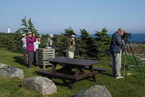 "Scoping Great Cormorants near Louisbourg. <div id=""caption_tourlink"" align=""right""><br>[photo © Chris Benesh]</div>"