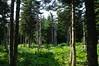 "Spruce-fir woodland<div id=""caption_tourlink"" align=""right""> [photo © participant Diana Bradshaw]</div>"
