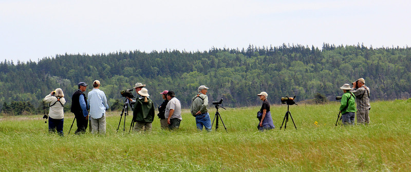 The group stops to admire a Nelson's Sparrow (Atlantic subspecies) in the grasses at Morien Bar beach. (Photo by guide Lena Senko)