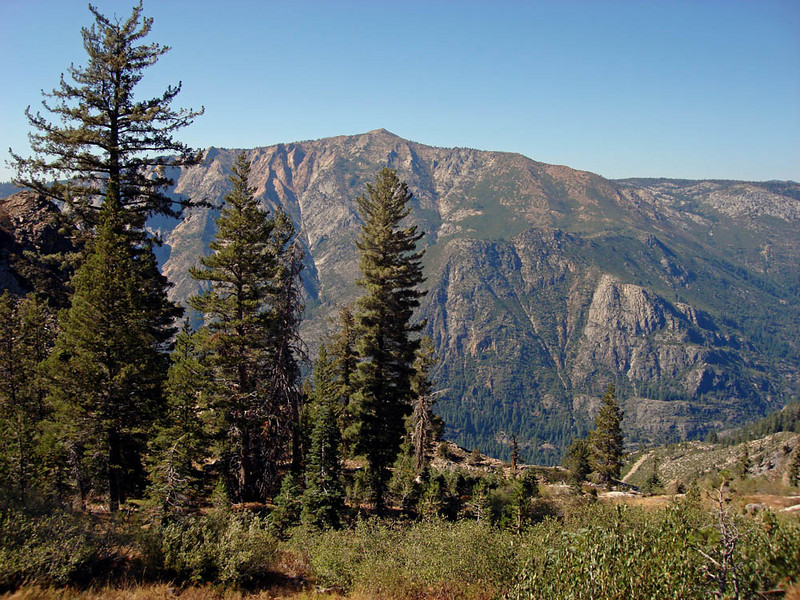 "Here in the highlands of Alpine County, the trees change from the species found lower down in the Sierra. Perhaps a Williamson's Sapsucker could come out into view in a spot like this? <div id=""caption_tourlink"" align=""right""> [photo © guide Alvaro Jaramillo]</div>"