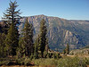 """Here in the highlands of Alpine County, the trees change from the species found lower down in the Sierra. Perhaps a Williamson's Sapsucker could come out into view in a spot like this? <div id=""""caption_tourlink"""" align=""""right""""> [photo © guide Alvaro Jaramillo]</div>"""