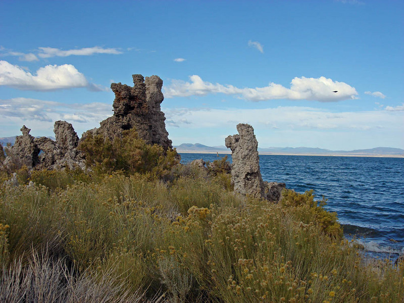 """Mono Lake, the eastermost site we visit, is in a desert sink. The lake evaporates and concentrates salts to high levels. This provides habitat for huge numbers of brine flies and brine shrimp, food for the hundreds of thousands of Eared Grebes, Wilson's Phalaropes, and California Gulls! <div id=""""caption_tourlink"""" align=""""right""""> [photo © guide Alvaro Jaramillo]</div>"""