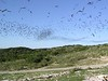 """...Mexican Free-tailed bats fill the sky above the Rio Frio back-country... <div id=""""caption_tourlink"""" align=""""right""""> [photo © participants Bill & Nancy Denton]</div>"""
