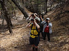 """Admiring Colima Warblers in Boot Springs <div id=""""caption_tourlink"""" align=""""right""""> [photo © guide Dan Lane]</div>"""