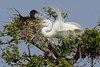 Great Egret and Neotropic Cormorant.  ~LS