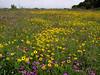 "Flowers<div id=""caption_tourlink"" align=""right""> [photo © guide Bret Whitney]</div>"