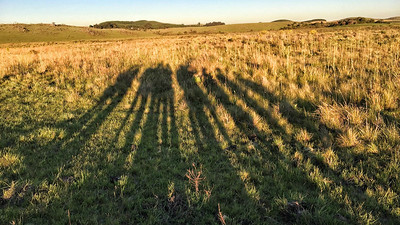 Group shadows at sunset vigil ahead of our Giant Snipe hunt on Spectacular Southeast Brazil. Photo by guide Bret Whitney.