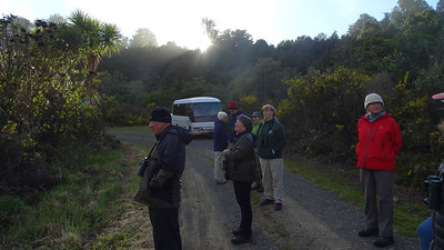 Must-do Birding Rituals II: Stand in a wild place at sunrise (Pureora, New Zealand, in this case) waiting for that first something to happen. Photo by guide Dan Lane.