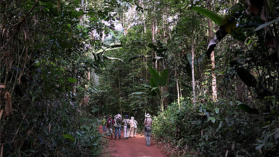 """""""Where we'd like to be"""" #2: Birding the beautiful tall rainforest at Guyana's Atta Lodge. Photo by participant Marshall Dahl."""