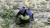 Participant Mary Lou Barritt shared this photograph of a pair of Eurasian Jackdaws at Rock of Cashel.