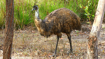 Participant Chuck Holliday caught this prehistoric-looking Emu between the trunks.