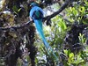 Participant Jan Wood captured this lovely setting for a tour highlight: a long-trained male Resplendent Quetzal.