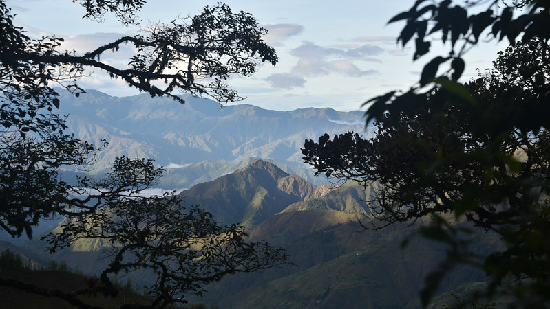 Participant Daphne Gemmill's lovely view from Podocarpus National Park gives a good idea of the rugged topography of the Ecuadorian Andes here.