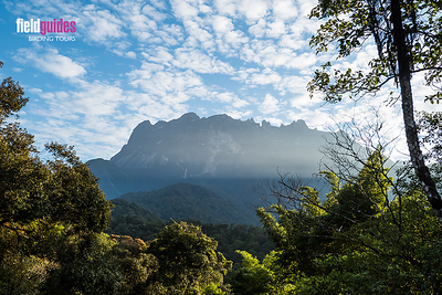 On a clear day, you can see the summit of Mount Kinabalu, the highest mountain in Borneo's Crocker Range and Malaysia's highest peak at 13,435 feet. On lovely forest trails here, our Borneo tour seeks some of Asia's most momentous birds. Thanks to participant James Moore for our introductory image for the August 2019 Recent Photos Gallery!