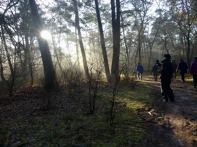 And we awake in a Netherlands forest on a brisk December morning, on the Holland: Dutch Masters & Waterfowl Spectacle tour with guides Godfried Schreur and Jay VanderGaast. (Photo by participant Mary Deutsche.)