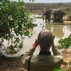 These young male African Bush Elephants, by turns engaged in roughhousing and bathing at Mole National Park, took no notice of their admirers on the far bank. Thanks to participant Mary Scala on our Ghana tour for this nifty photo.