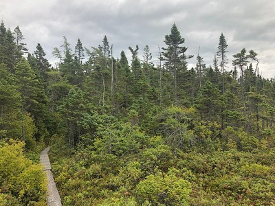 Also in Lubec, Maine Coast Heritage Trust manages the lovely Boot Head Preserve, incorporating 700 acres of rugged coastline, upland forests, bogs, and coastal wetlands. The group walked a bit of the preserve's two miles of trails, which afford sweeping views of Grand Manan Island.