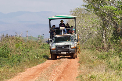 To search for birds and other creatures that tend to remain concealed in trees or hidden by ground vegetation, the group was able to ride high in a safari truck designed just for that purpose.