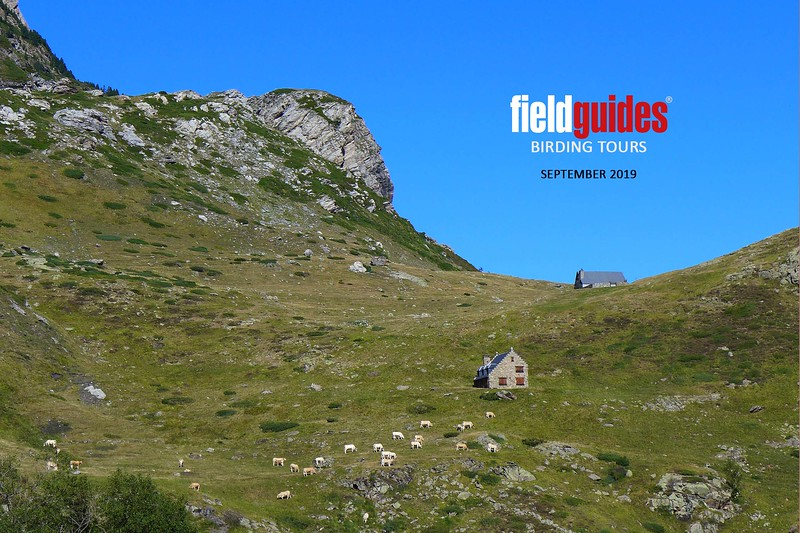 Welcome to the (belated) September 2019 Recent Photos Gallery! We've gotten in some lovely images from participants and guides from six recently completed tours, which we are pleased to present here. Our cover image of a Pyrenean vista by Judie Dunn comes from our first France: Camargue & Pyrenees tour of the autumn, guided by Megan Edwards Crewe and Marcelo Padua.