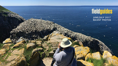 "We begin this month's gallery on our recent ""Newfoundland & Nova Scotia"" tour, where a sunny day at Newfoundland's Cape St Mary's gannet colony is a spectacular experience! Chris Benesh & Cory Gregory guided, and Cory brought home this image."
