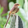 We close this month's gallery with Ghana participant Greg Griffith's handsome portrait of a Yellow-billed Shrike. We hope you enjoyed these images -- thanks to all our participants and guides who contributed! Till next month, good birding from all of us at Field Guides!