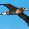 If this doesn't look like it could be the Caribbean, you're right! It's a Black-footed Albatross by participant Rick Woodruff from our next tour: Hawaii.