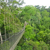 A fine view of the Kakum NP canopy walkway--which itself provides fine views of many birds! Photo by participant Greg Griffith.