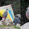 Blood Pheasant is another marquee Bhutan bird. Guide Richard Webster (l.) and participants David & Judy Smith brought home these images.
