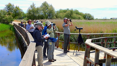 Co-leader Godfried Schreur (r.) and our group check out some marsh birds. Photo by participant Chuck Holliday.