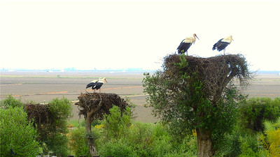 Classic Spain: White Storks -- though not usually in such a condominium! Photo by participant Chuck Holliday.