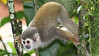 Now for a series of tours from South America. This Squirrel Monkey came in for a close-up during our Ecuador's Shiripuno Lodge tour. Photo by participant Steve Parrish.