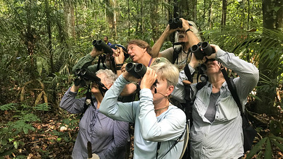 Guide Bret Whitney (top-center) deftly points out the target bird, a Guianan Red-Cotinga. Photo by guide Tom Johnson.
