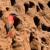 Stunning, too, in its own right is this Southern Carmine Bee-eater by participant Peggy Keller.