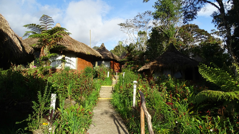 One of the lovely stops on our In Style tour was Ambua Lodge -- birds-of-paradise right on the grounds! Photo by guide Phil Gregory.