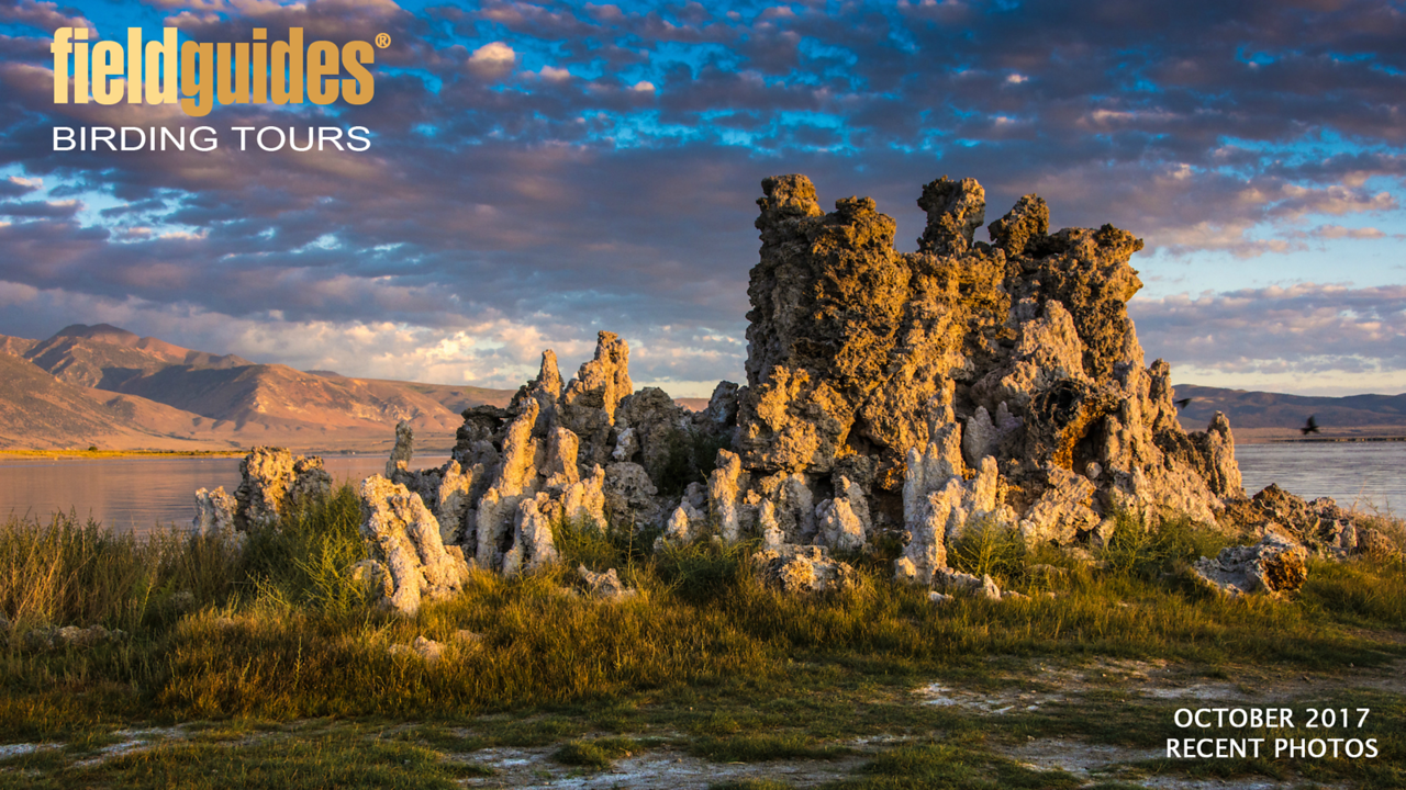 We kick off this month's gallery with a sublime image of tufa towers at Mono Lake from participant David Baker on one of our Slice of California: Seabirds to Sierra tours. We'll also be sharing some enticing images from tours to Oregon, Brazil, Ecuador, France, and Morocco!