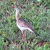 Red-legged Seriema is always one of the tour favorites. Photo by participant Merrill Lester.