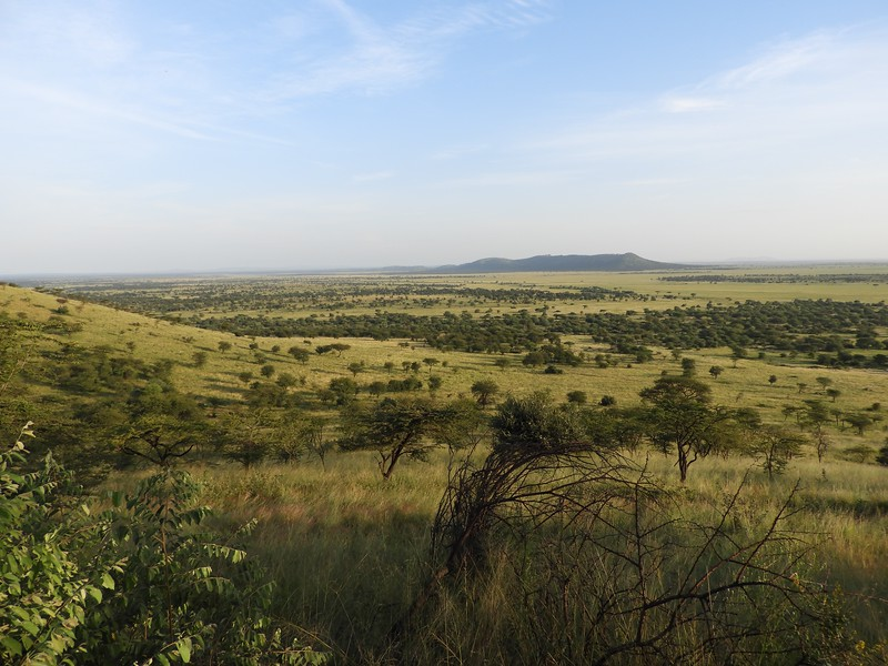 Nor does their domain, here a view of the Serengeti from Serena Lodge. For those who remember Joy Adamson's book <i>Forever Free</i>, this is where Elsa's cubs were returned to the wild. Photo by guide Terry Stevenson.