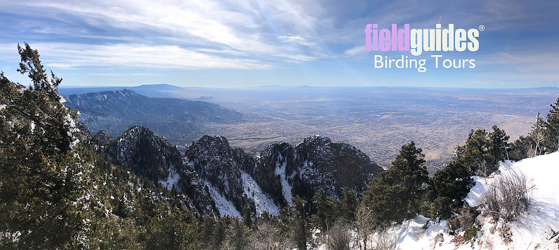 "Welcome, everyone! This vista from the Sandia Mountains toward Albuquerque from our <a href=""https://fieldguides.com/bird-tours/new-mexico/"" target=""_blank""><span class=""slideshow_tourlink3"">NEW MEXICO: BIRDING THE LAND OF ENCHANTMENT</span></a> tour with guide Doug Gochfeld kicks off our March 2020 Recent Photos Gallery. Beautiful at every season, New Mexico is stunning in winter and great for birding! Photo by guide Doug Gochfeld."