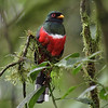 A Masked Trogon is always worth a pause, lovely as it is. (Photo by participant Steve Wakeham)