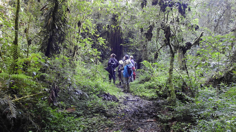 Our Peru's Magnetic North group birding the cloud forest with guide Jesse Fagan at left, photographed by participant Max Rodel.