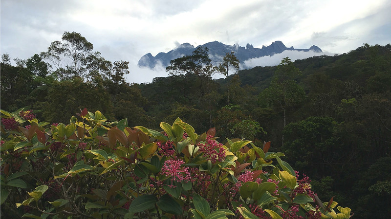Our view of Mount Kinabalu in the Crocker Range, the dominant feature of the tour and highest mountain in Malaysia, as seen from Hill Lodge. Photo by participant Suzanne Winckler.